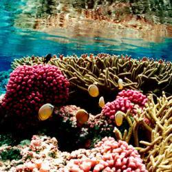 Coral Reef at Palmyra Atoll National Wildlife Refuge