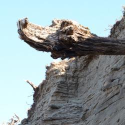 Driftwood in Siberia