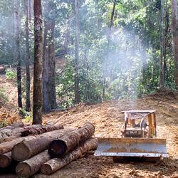 Logging in the rainforest of Kalimantan © Greenpeace / Kate Davison